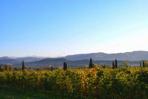 Valpolicella_landscape