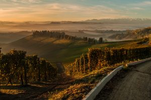Langhe_landscape